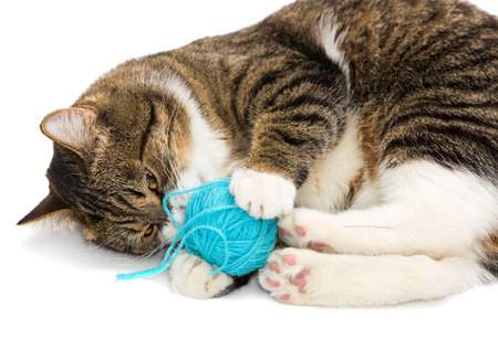 Gray tabby cat plays ball of wool Stock Photo