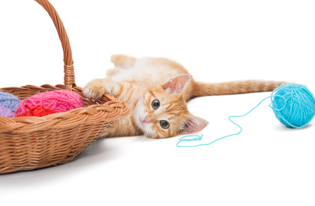 Orange tabby kitten  plays ball of wool photo