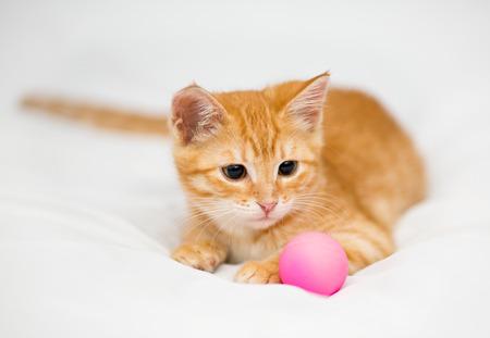 Orange kitten with a ball on a white background photo