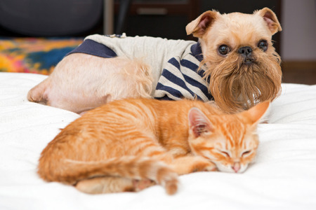 Dog and orange kitten sleeping together on the bed photo