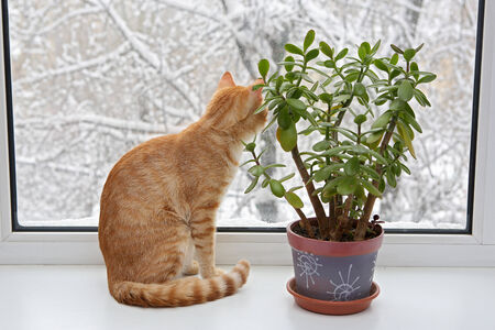 window sill: Orange cat sitting in the window, through the glass winter and snow Stock Photo
