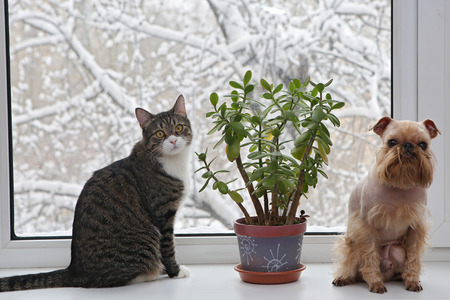 Dog and grey cat sitting in the window, through the glass winter and snow photo