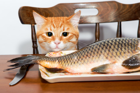 Orange cat and a big fish on a plate photo