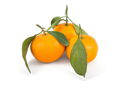 Frash tangerines on stem with green leaves isolated on white photo