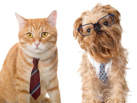 Gato en un lazo y un perro con gafas, aislado en blanco