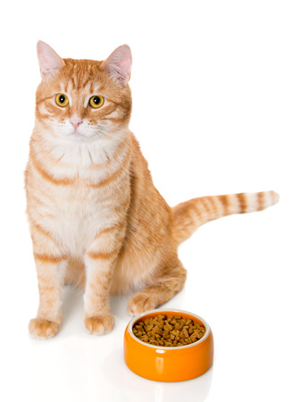 Red cat sitting near the bowl of dry food, isolated on white
