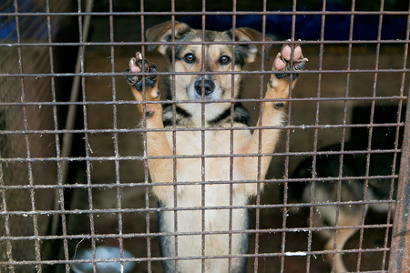 dog kennel: Shelter for homeless dogs, waiting for a new owner Stock Photo