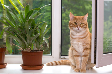 Orange cat sitting on a white window sill next to the flower pot