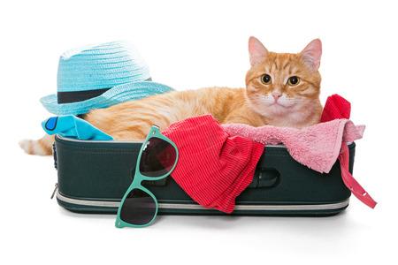 Gatto arancione giaceva su una valigia piena assemblato per un viaggio di vacanza, isolato su bianco Archivio Fotografico - 41946795