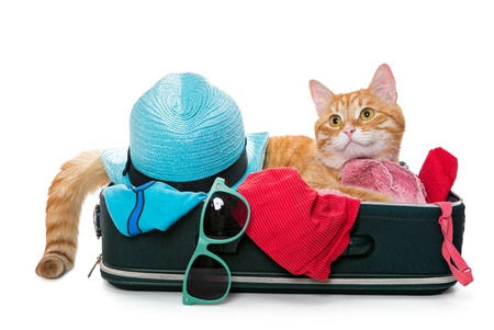 suitcase: Orange cat lay on a suitcase full assembled for a holiday trip, isolated on white