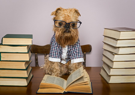 Serious dog in glasses and  shirt reads books