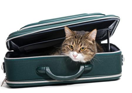 maleta: Gato gris que se sienta en una maleta verde, fondo blanco