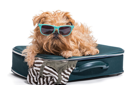 funny glasses: Funny dog in glasses lies on the suitcase, isolated on white