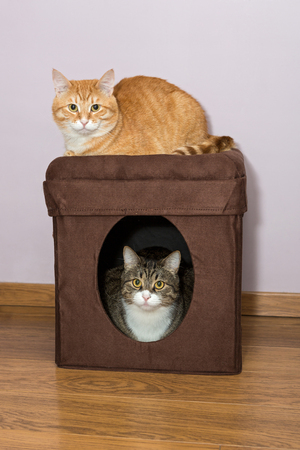 two floors: Grey and red cat house is divided on two floors Stock Photo