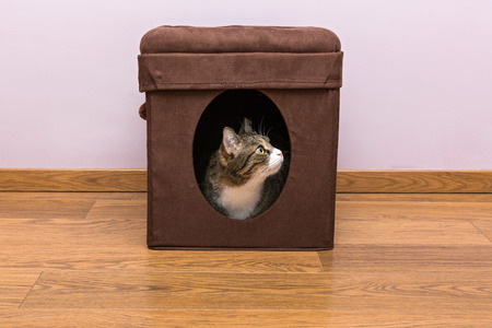 hideout: Grey cat sitting in your personal house