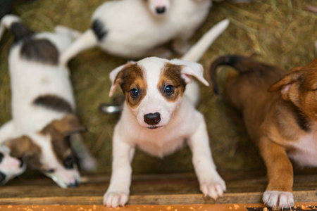 best shelter: Little puppy at the shelter looks with hope.  Take me, Im the best! Stock Photo
