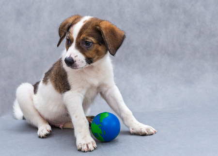 spotted dog: Little spotted puppy dog with blue ball