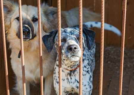 waiting convict: Two big dogs in a cage of a shelter