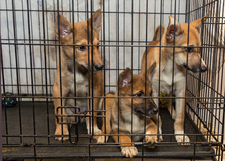 confined: Three little puppy dogs in a cage of a shelter Stock Photo