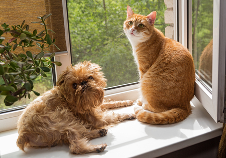 Ginger the cat and the dog sit on the windowsill and bask in the sun Stock Photo