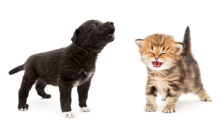 Crying kitten and puppy isolated on white background 스톡 콘텐츠