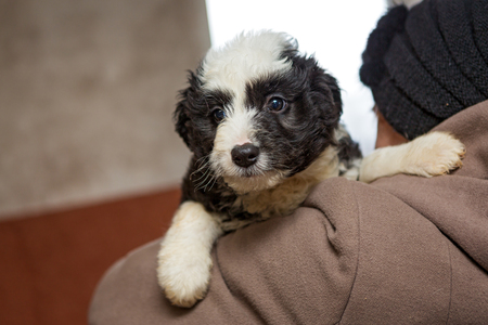 Little scared puppy from the shelter in the hands of women
