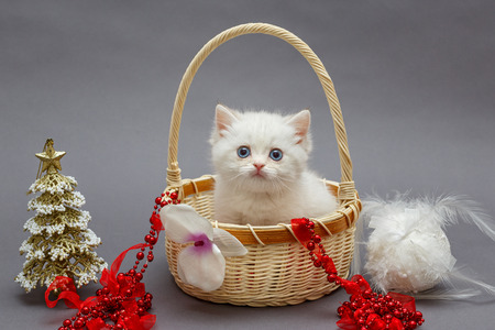 White British kitten in a basket and Christmas toys Stock Photo