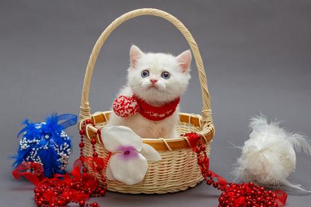 Gatito británico blanco en una canasta y juguetes de Navidad