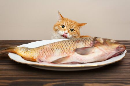 Red cat wants to steal a big fish from a white plate on a wooden table