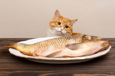 Red cat wants to steal a big fish from a white plate on a wooden table Stock fotó