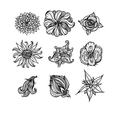 set of decorative floral elements. hand-drawn black and white illustration vector