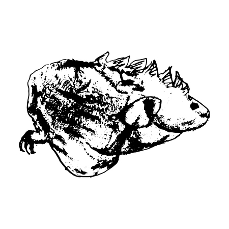 fantastic animal. drawn by hand ink vector illustration on white background