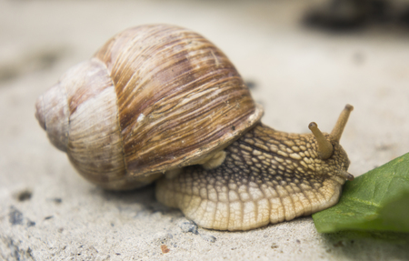 a snail on a stone surface is crawling to the green leaves