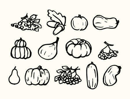 Autumn harvest. A large collection of pumpkins, zucchini, berries, fruits, vegetables are drawn by hand. Graphic vector illustration.