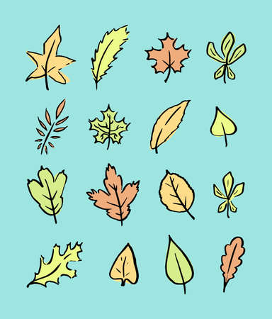 Autumn set of different leaves. Hand drawn linear colored illustration. Vector. Illustration