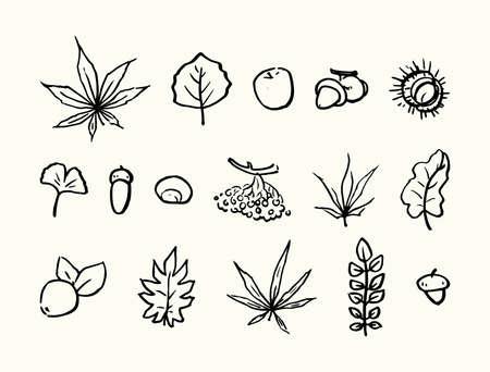 Autumn set of leaves, fruits. Hand drawn linear illustration. Vector. Illustration