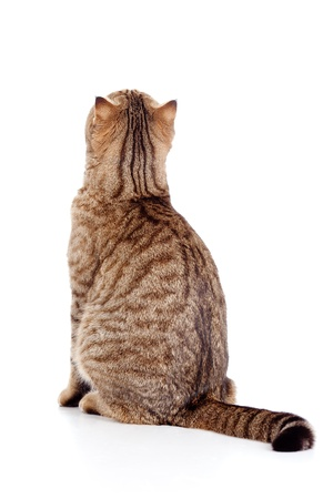 furry tail: rear view of cat
