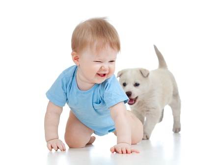 cute child playing and crawling away a puppy, puppy following photo