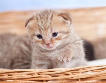 Adorable small kitten in wicker basket photo