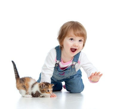 cute pussy: funny little girl playing with Scottish kitten Stock Photo