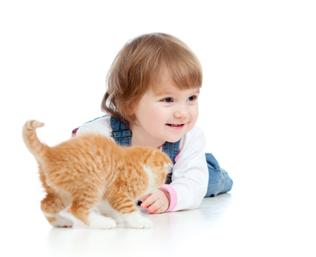 british pussy: funny little girl playing with Scottish kitten Stock Photo