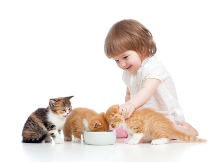funny child girl feeding attractive kitten photo