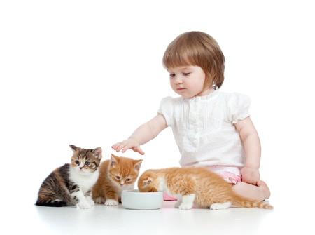 baby  pussy: funny child girl feeding attractive kitten
