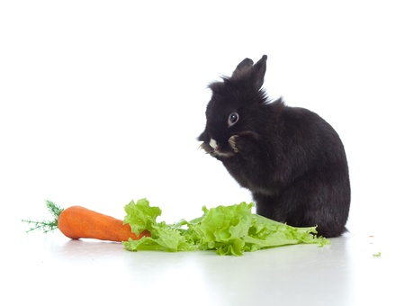 small black rabbit with carrot and lettuce sitting on floor photo