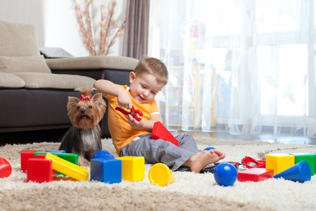 implements: Child playing with building blocks at home  York dog sitting near boy