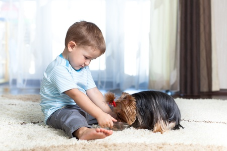 adorable boy feeding yorkshire terrier dog  at home photo