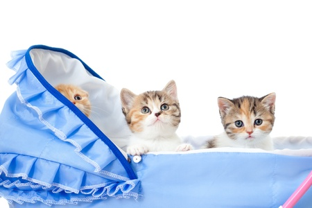 pathetic: three sweet kittens in baby carriage Stock Photo