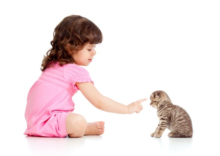 curly headed: little child playing and bringing up Scottish kitten