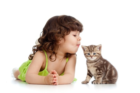 curly headed: funny child playing and kissing Scottish kitten