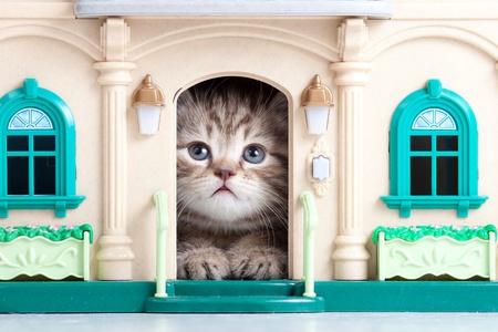 petit chaton assis dans la maison de jouets
